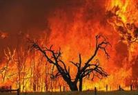 Ecology and Bushfire Consultation