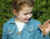 Entomology Educational Programs