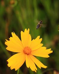 Environmental Impact Assessments and Flora & Fauna Analysis