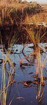 Environmental Wetland management