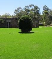 Green Garden and Seeding Services