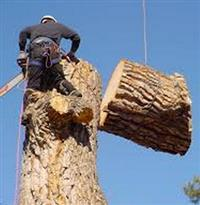 Tree Services by Landscape Specialists