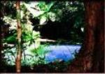 Cooper Creek Wilderness Fauna and Flora
