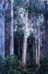 Forests - precious and wild