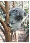 Koala Plans Of Management