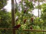 Rainforest Jungle Camp