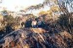 The Malleefowl Mound