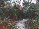 Yelverton Brook